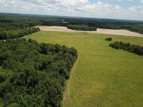 Beautiful Longleaf Pine & Crop Land : Davisboro : Washington County : Georgia