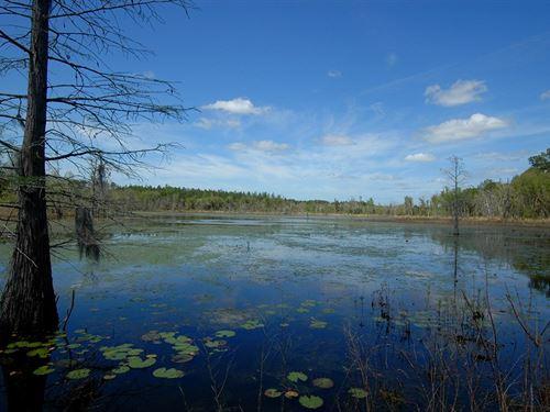 Holmes Creek Plantation 1165 Acres : Vernon : Holmes County : Florida