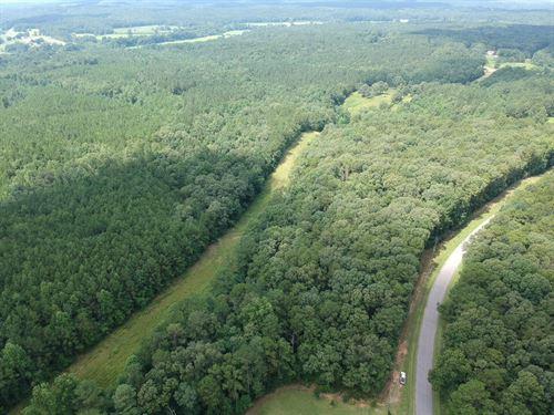 28.5+/- Wooded Acres In Heflin : Heflin : Cleburne County : Alabama