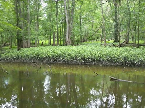 Looking Glass River Frontage : Laingsburg : Shiawassee County : Michigan