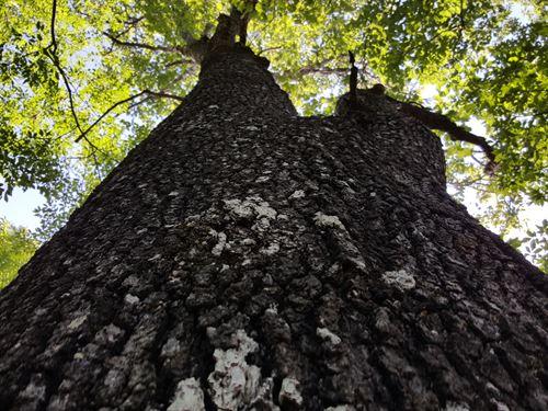 Pine Mountain Tract : Rockmart : Polk County : Georgia