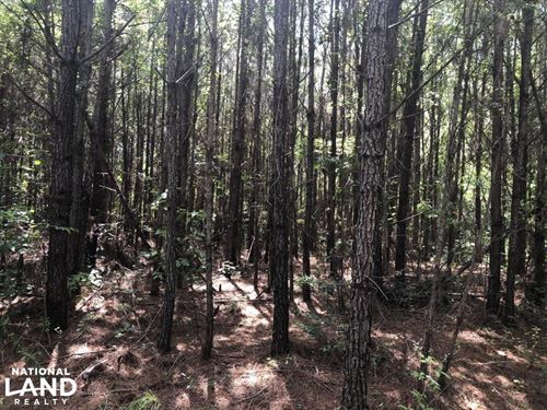 Taylorsville Timber Investment : Taylorsville : Smith County : Mississippi