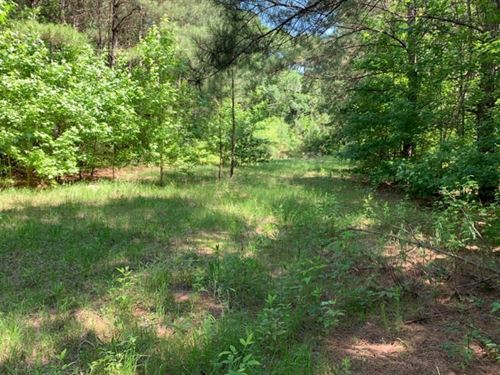 60 Acres In Lincoln County In Bogue : Bogue Chitto : Lincoln County : Mississippi