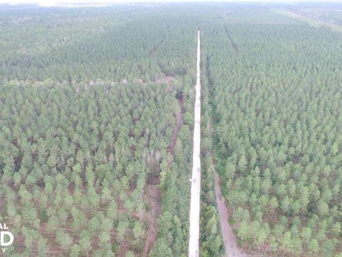 Rocky Point Timber And Hunting Land : Burgaw : Pender County : North Carolina