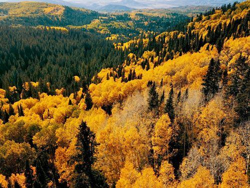 Castle Rock Ranch : Montrose : Ouray County : Colorado