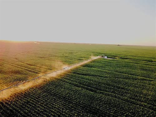 Eastern Colorado Irrigated Farm : Holyoke : Phillips County : Colorado