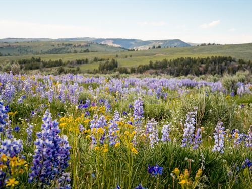 Bighorn Mountain Ranch : Greybull : Big Horn County : Wyoming