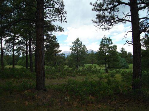 Bear Claw Pass Ranch, South Parcel : Gulnare : Las Animas County : Colorado
