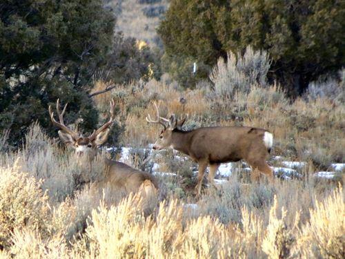 Pinon Hills Ranch Lot 39 : Pagosa Springs : Archuleta County County : Colorado