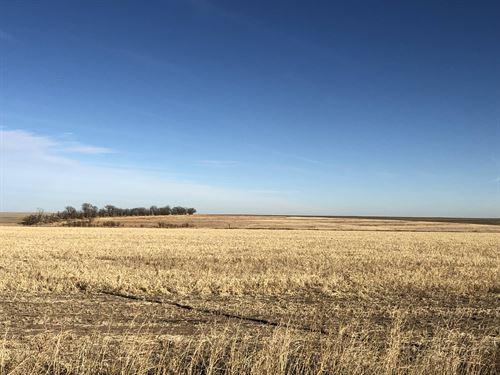 Cheyenne County Crop & Grass : Saint Francis : Cheyenne County : Kansas
