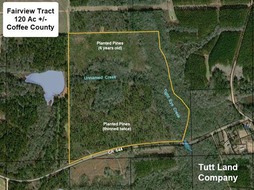 Home Site-Timber-Creeks-Hunting : Samson : Coffee County : Alabama