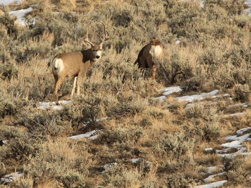 The Deer Pasture : Craig : Moffat County : Colorado