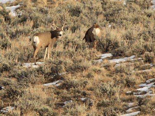 The Deer Pasture : Craig : Moffat County : Colorado