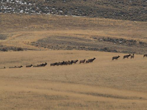 Wildlife Grass Ranch : Craig : Moffat County : Colorado