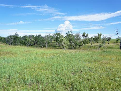 Matheson Pasture & Creek Bottom : Matheson : Elbert County : Colorado