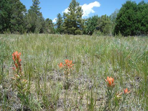 Cataloochee Ranch : Trinidad : Las Animas County : Colorado