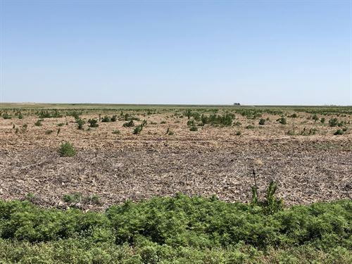 Grant/Stanton County Grass, Crop : Ulysses : Stanton County : Kansas
