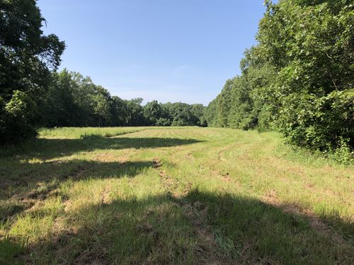 140 Acre Timber & Hunting Property : Utica : Hinds County : Mississippi