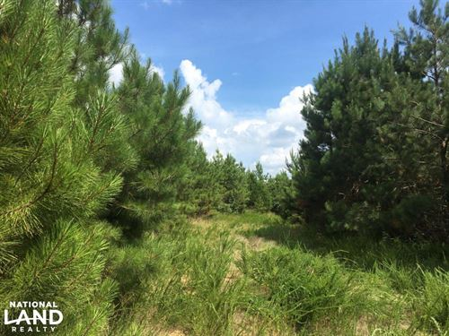 Timber Investment & Hunting Tract : Clinton : Laurens County : South Carolina