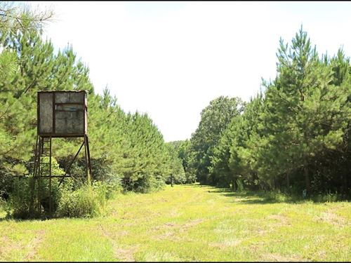 37.66 Acres In Hinds County In Utic : Utica : Hinds County : Mississippi