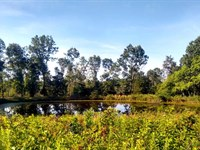 Great Hunting Or Homesteading Land : Montier : Shannon County : Missouri