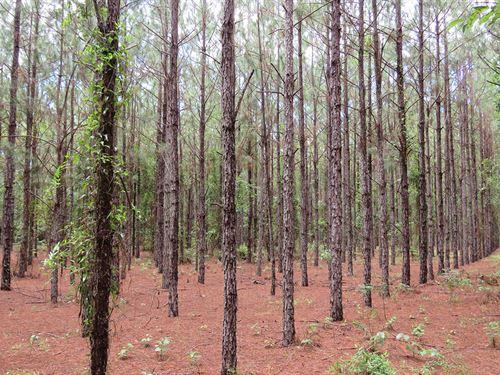 Crossroads Pine Plantation Flyer : Branford : Suwannee County : Florida
