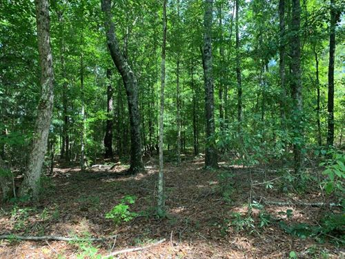 Hunting And Timber In Pike County : Grady : Pike County : Alabama