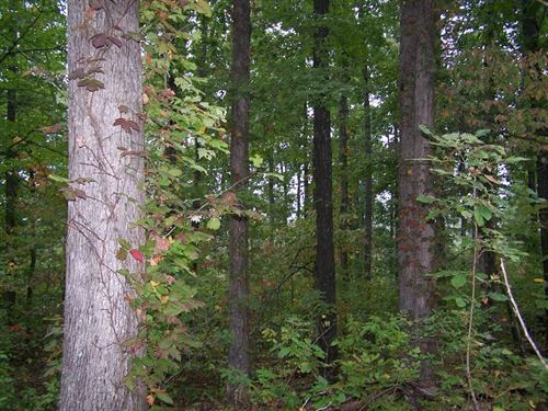 Best Hunting Property Available : Harriet : Searcy County : Arkansas