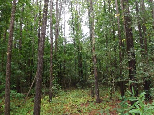 51 Acres In Covington County In Mou : Mount Olive : Covington County : Mississippi