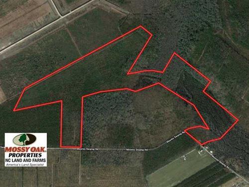 120 Acres of Hunting And Timber LA : Grantsboro : Pamlico County : North Carolina