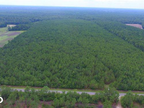 Moore's Creek Hunting Land : Burgaw : Pender County : North Carolina