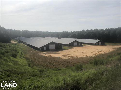 Saint Matthews Chicken Farm : Saint Matthews : Calhoun County : South Carolina
