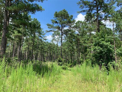 Pine Timberland Small Pond : Chidester : Ouachita County : Arkansas