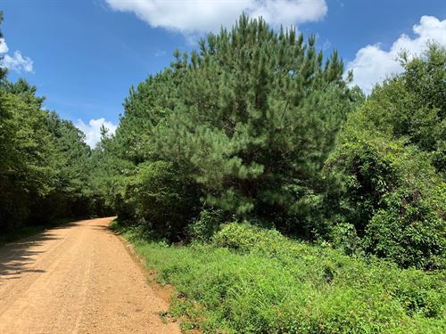 Young Planted Pine Land, Creek : Stephens : Ouachita County : Arkansas