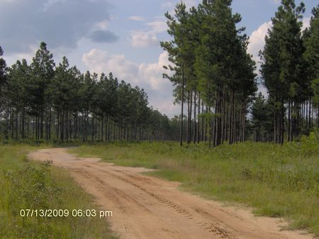 5 Acres Only $200 Per Month : Baxley : Appling County : Georgia