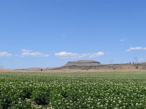 Farming, Grazing, And Living : Tulelake : Siskiyou County : California