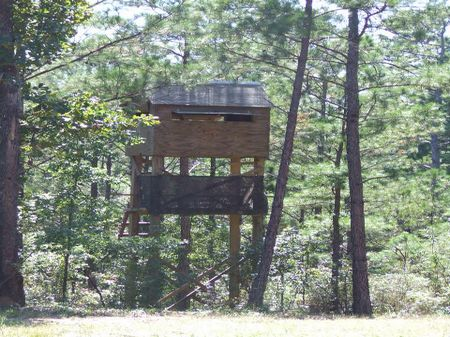 40 Acres In National Forest : Sprott : Perry County : Alabama
