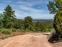 20 Wooded Mountain Acre Homesite : Ramah : Cibola County : New Mexico