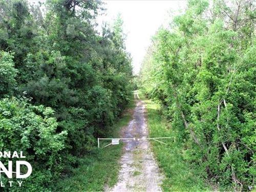 Pamlico 4 South : Grantsboro : Pamlico County : North Carolina