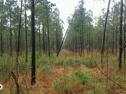 Rocky Point Hunting Land : Burgaw : Pender County : North Carolina