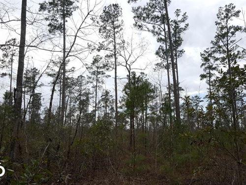 Far Side Drive Hunting And Timberla : Burgaw : Pender County : North Carolina