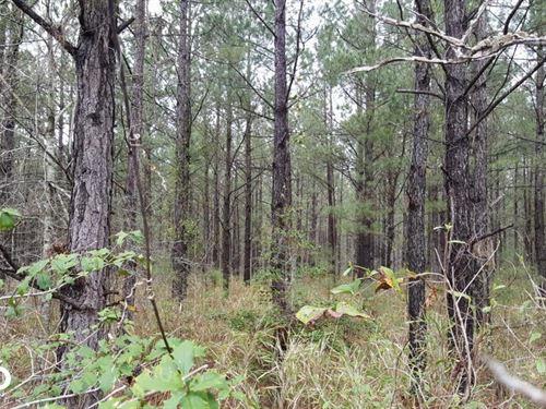 Stag Park Hunting Land : Burgaw : Pender County : North Carolina