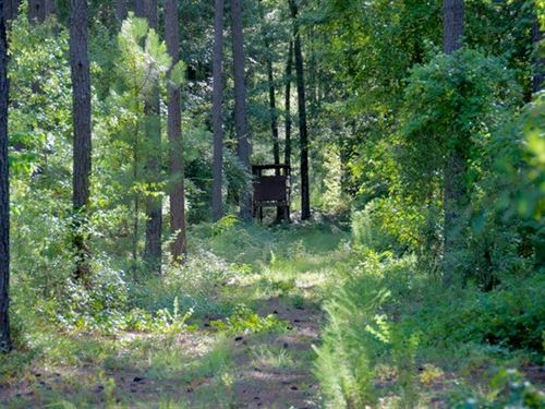 Seven Pines Tract : Williston : Barnwell County : South Carolina