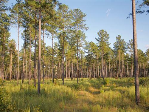 Millpond Branch Plantation : Estill : Hampton County : South Carolina