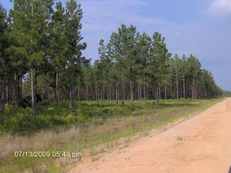 43 Acres Awsome Hunting Tract : Baxley : Appling County : Georgia