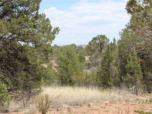 Mountain Acreage Only $6,500 : Seligman : Yavapai County : Arizona