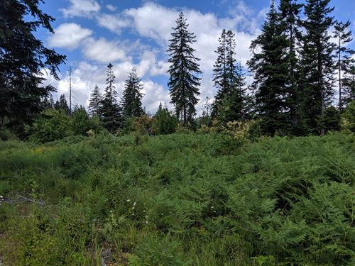 Mountian Building/Recrational Lot : Orofino : Clearwater County : Idaho