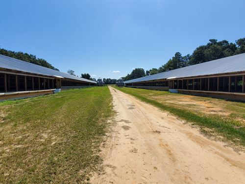 2 House Poultry Breeder Farm : Blackville : Barnwell County : South Carolina