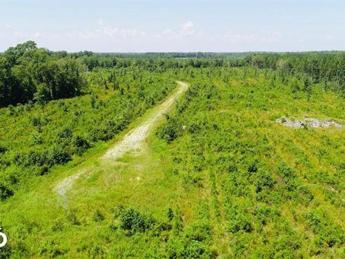 Pitt Meadow Branch : Greenville : Pitt County : North Carolina