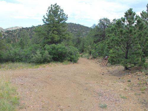 Custer County Co, 42+ Acres Camping : Westcliffe : Custer County : Colorado